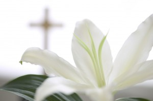 easter-lily-300x199